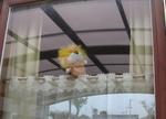 窓ライオン.JPG